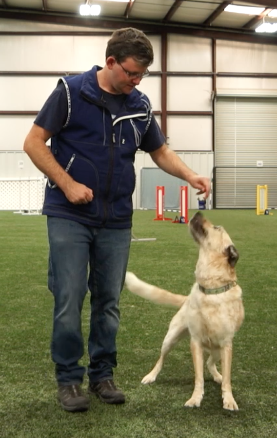 Dog Trainer Trevor Smith as an adult, working with a blonde dog.