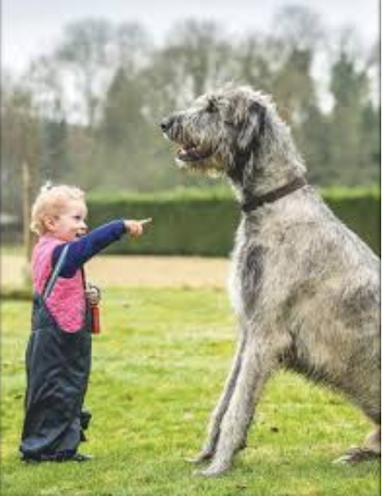 6 Year Old Dog Trainer Trevor Smith pointing at a grey dog twice his size.